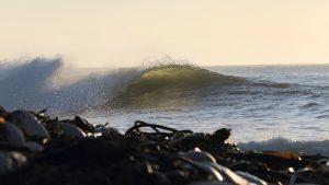 Wave and seaweed